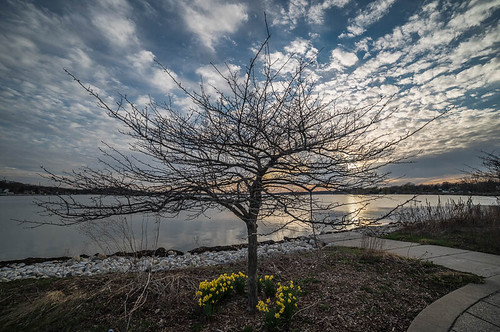 park sunset sky flower tree nature water wisconsin landscape spring village unitedstates april 2015 lakefrontpark pewaukee pewaukeelake