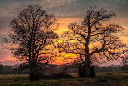 park trees sunset sky sun set clouds woodland hampshire hook hdr warsash photomatix