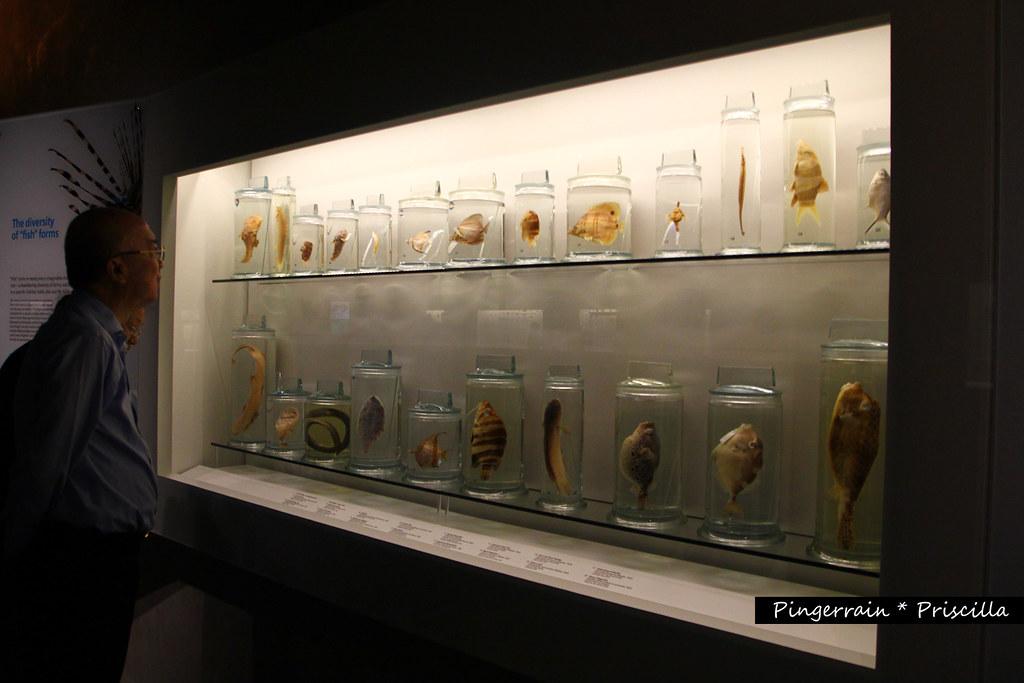 Fish Cabinet