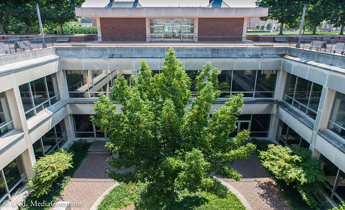 Courtyard Tree, now also known by its nickname, Treebeard. Photo courtesy of the Media Commons