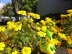 Bayleef in Atsugi, Kanagawa 6