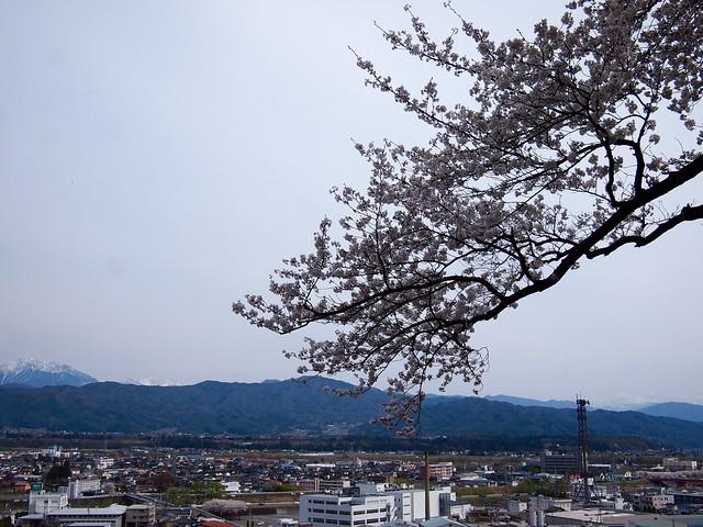 2015.4.12 お花見