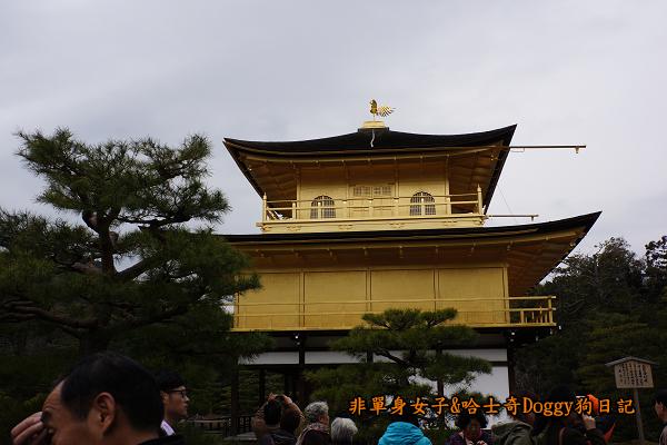 日本京都金閣寺14