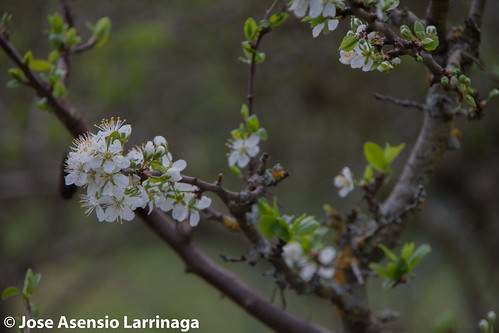 Primavera 2015 #DePaseoConLarri #Flickr -023
