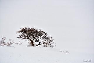 DSC_7039.jpg72sign Tree in snow Wendy Nuttall
