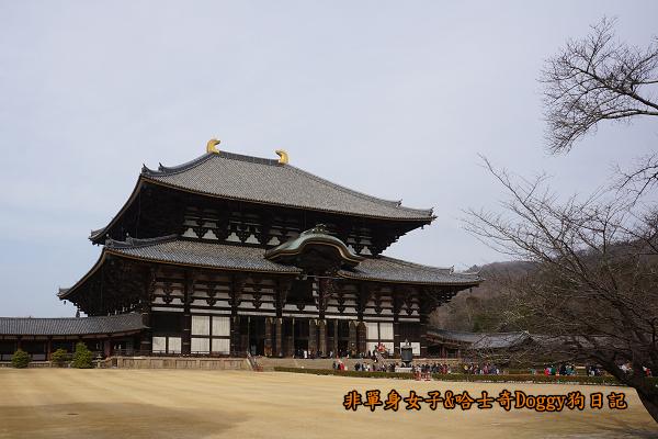 日本奈良公園東大寺24
