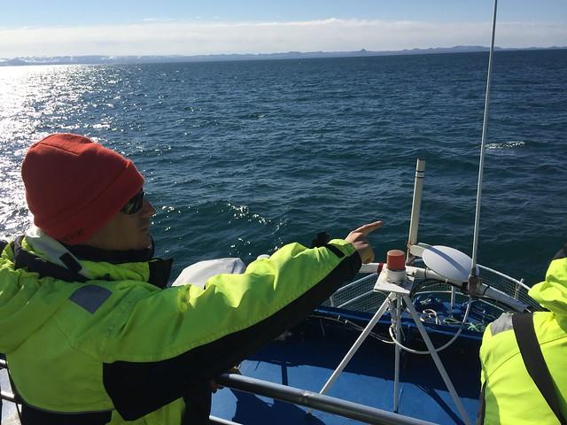 Sele buscando ballenas en Islandia