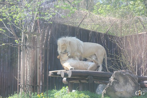 Zoo Bratislava 18.04.201590