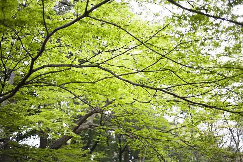 Shinjuku gyoen, Tokyo, Japan_IMG_4859