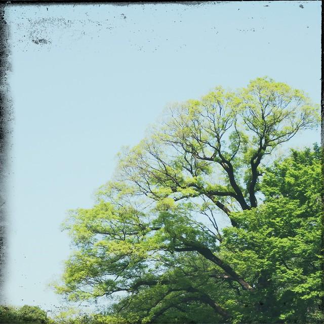 Green tree on sunny blue sky