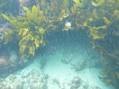 Snorkeling off Bennion Beach
