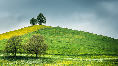 Printemps dans la campagne fribourgoise (Switzerland)