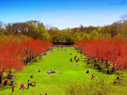 newyork brooklyn spring image brooklynbotanicgarden dmitriyfomenko