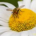 144 friggen bug by starc283