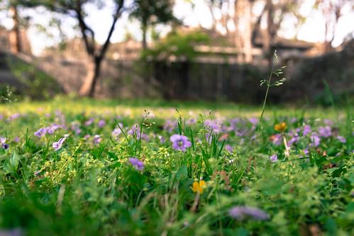 Backyard in bloom