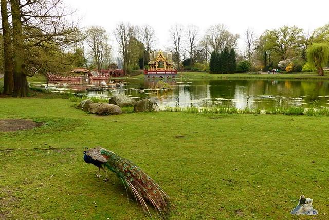 Tierpark Hagenbeck 25.04.2015   230