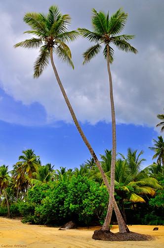 travel naturaleza beach nature landscape dance danza playa paisaje palmeras palm viajar bailar repúblicadominicana samaná danzar bailas ¿bailas carlosarriero lasterrenasplayabonita