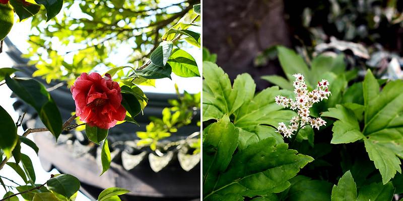 Chinese Garden Blooms