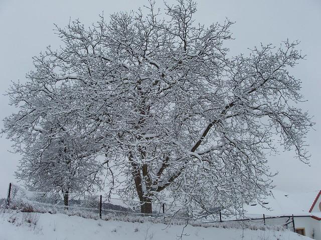 200603030041_snowy_tree_silhouette