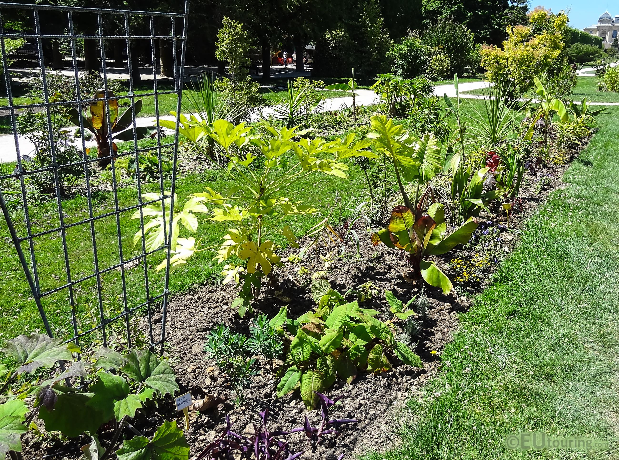 Jardin des Plantes greenery