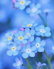 Blue Blue Blue Bleu Blue Jaune Blanc Fleur Nature Flickr