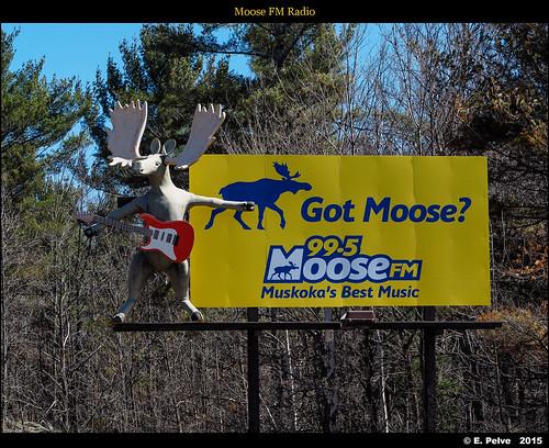 Moose FM Radio