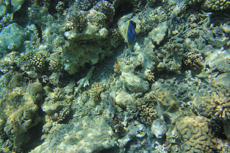 corals in Maldives