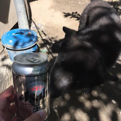 甲斐犬とビール