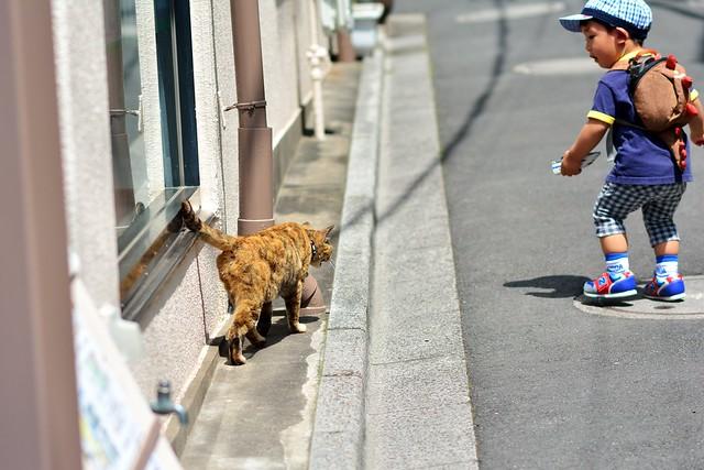 ネコを見つけてびっくりする子供の写真