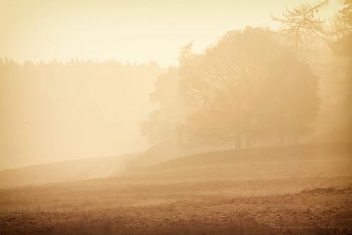 park morning mist fog sunrise canon 70200 bradgate f4l 40d