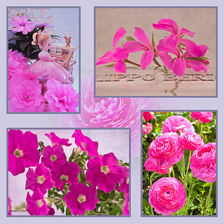 Photo Picture Collage In Pinks