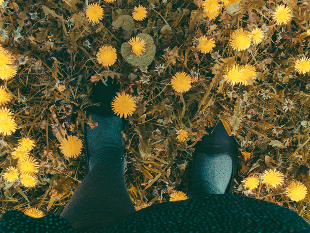 feet and dandelions