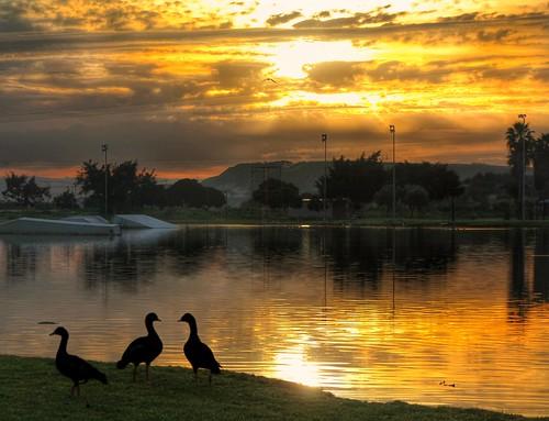 sunset sky nature silhouette sunrise israelnature amazingnature sunsetsilhouette skyporn birdsilhouette fantasticnature skychasers