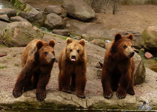 Tierpark Hagenbeck 25.04.2015   28