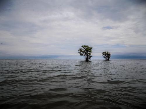 Lake Marion Plantation Islands-51