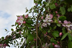 Pink flowers and the sky - Photo of Porchères