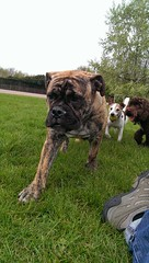 Woof  Dog walking services Www.harrisons-dogs.co.uk #balham #clapham #dogwalking #dogwalkers
