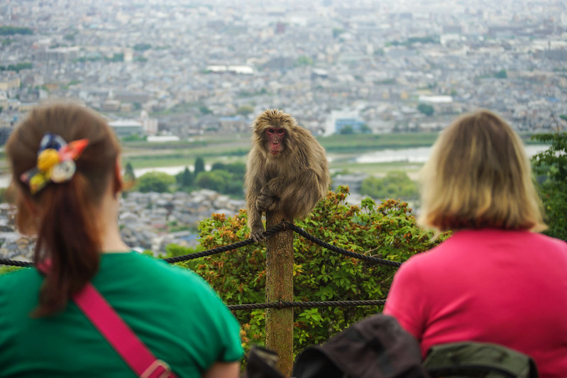 Marianne, monkey, Tarja