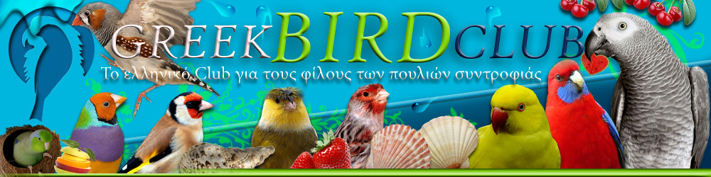 GreekBirdClub - Powered by vBulletin