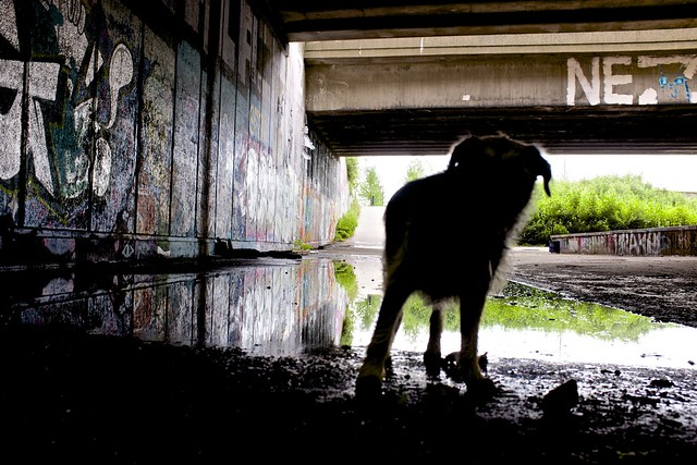 Polly under the Eastway