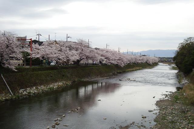 2015/04 高野川沿いの桜