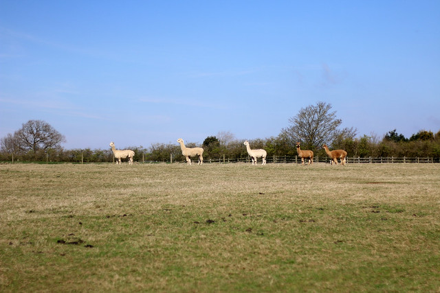TOFT Alpaca Open Day April 2015