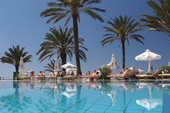 arecales, tropics, palm family, resort town, swimming pool, leisure, vacation, resort,