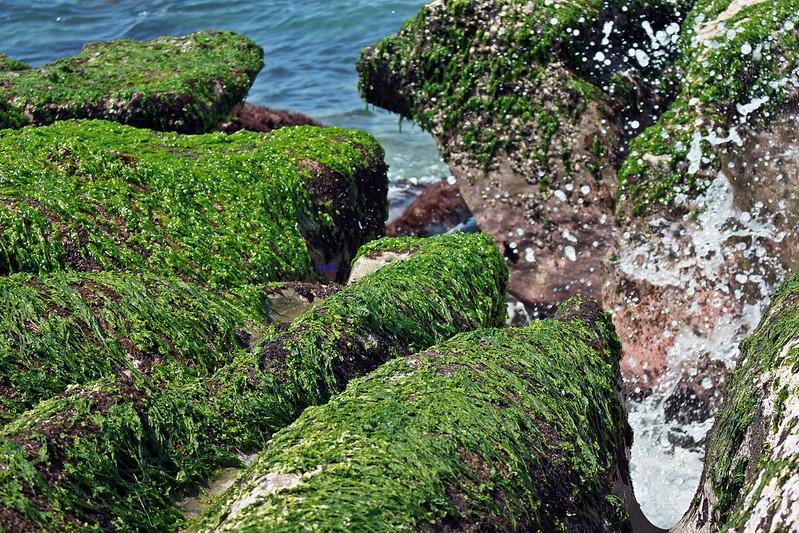 17度C台二線景點-石門-老梅綠石槽 (38)