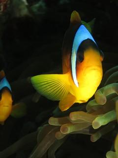 Nemo Glow