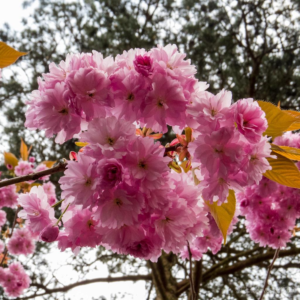 Blosson