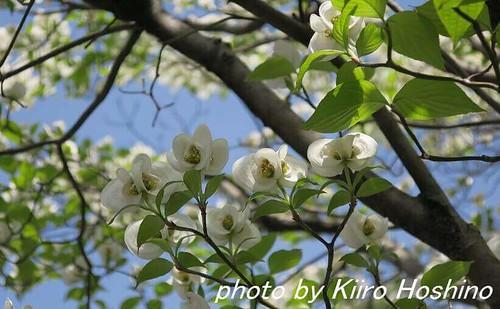 G9Xレビュー、白い花