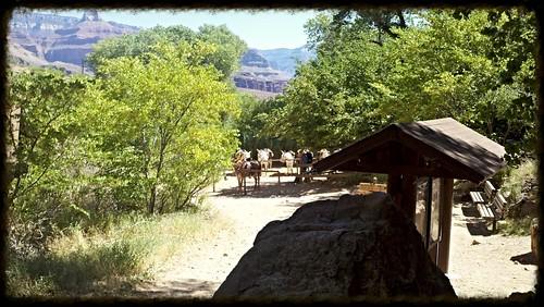 mule corral
