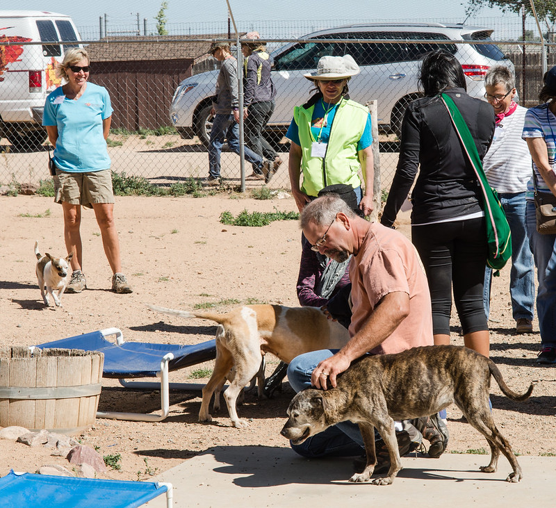 Tour Group Interacting with Rescue Dogs