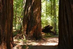 Humboldt Redwoods State Park